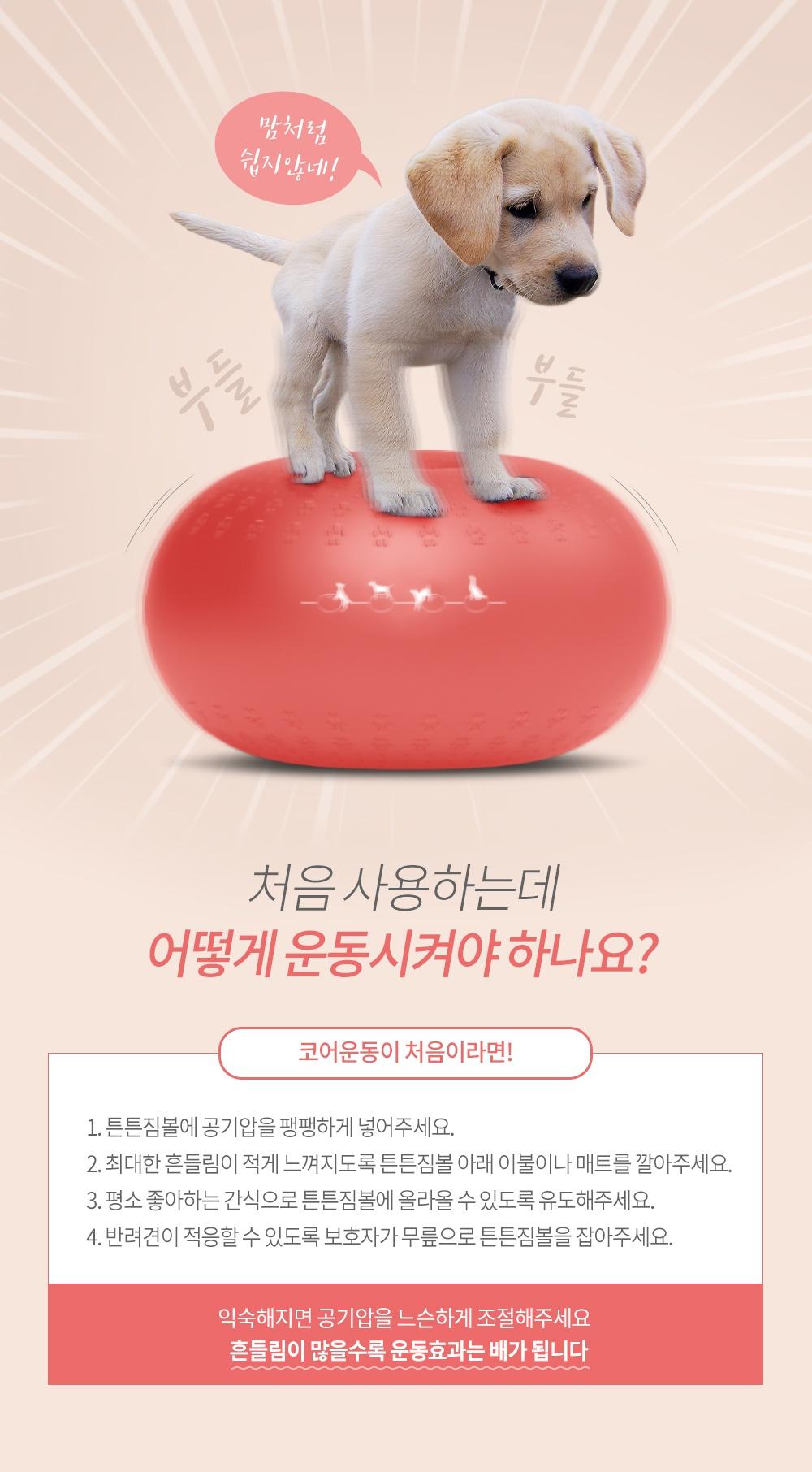반려견 운동기구 튼튼짐볼+홀더 (단품/세트)-상품이미지-26